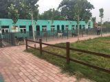 鄭州專業寵物訓練基地-解決犬主人難題