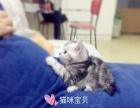 超萌猫咪宝贝找新家,纯家庭繁殖无病无癣
