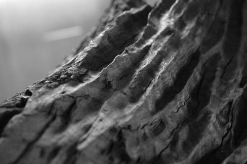 什么地方可以鉴定阴沉木,错版币,私人现金当天收购古玩古董