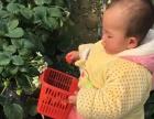 郊区农家乐(摘草莓)