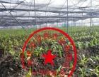 白芨种植加盟 种植养殖 投资金额 1-5万元