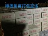 质优白鲢水花批发,花鲢水花价格,广东草鱼水花鱼苗厂