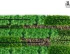 普陀华东师大仿真花、屋顶绿化、垂直绿化公司