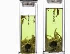 合肥希诺玻璃杯批发价格-合肥希诺玻璃杯总代直销