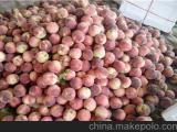 北京毛桃种植基地在那 山东油桃种植基地\今日大棚油桃价格