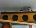 猫咪寄养之家