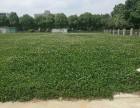 江宁开发区东南大学附近10亩土地出租可建厂房办公室