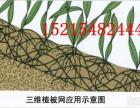 池州三维植被网多少钱
