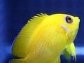 家庭海洋景观水族鱼缸订做 静谧海岸水族