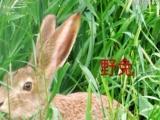 普通兔兔批发零售,两只包邮