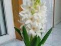 时令鲜花绿植花卉、盆栽租赁、鲜花、开业花篮创意婚礼