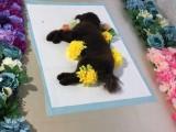 狗死后可以火化 宠物殡葬