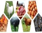 郑州菜鲜鲜有机蔬菜配送公司一体化产销商品类齐全