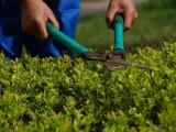 绿化养护服务,小区学校单位企业私人订制绿化养护