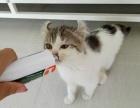 卷耳小母2800,猫咪价格以标题为准