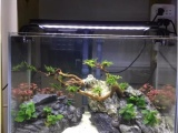 朝陽魚缸維護