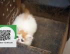 杭州哪里有加菲猫出售 杭州加菲猫价格 杭州宠物狗出售信息