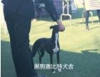 北京黑驹惠比特犬舍你听过吗?