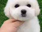 宜昌哪里有狗狗领养宜昌哪里狗狗便宜宜昌狗狗多少钱