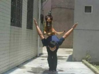 佛山龙威宠物警犬训练学校寄养训练