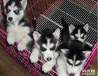 东莞最大养殖场直销各种幼犬 品种齐全 包养活