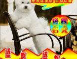 诚信卖狗 专业繁殖泰迪熊犬 检查健康后再抱走签协议