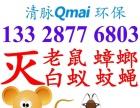酒店家庭物业灭鼠蟑蚊、蚁蚤虫-厦门清脉Qmai环保