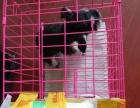 潍坊宠乐游 宠物出国 办理检疫 宠物托运