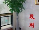 静安花卉植物租摆租赁植物租摆养护绿化长宁区绿化