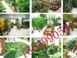 鄭州楓林仿真植物廠家直銷假花人造樹常青綠植