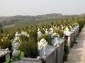 八岭山墓园———人生后花园