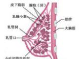郑州道合直供专业郑州针灸美容货源,并提供全面的中医整形产品服