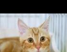 出售各种猫,自家养的,不是猫贩子,因搬家所以出售