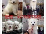 南昌宠物店出售各类名犬,加微信有折扣