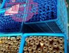 在对的时间要遇到对的项目,迪曼特油切洗洁宝厂家期待您的加入