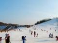 【一价全含】哈尔滨-亚布力圣诞别墅村、雪乡、威虎寨、雪乡年夜饭6