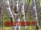 广西黑皮甘蔗(长2.4米,重6斤,5毛/斤)博白黑皮甘蔗,产地批