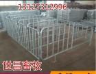 老母猪怀孕定位栏便于定位的母猪定位栏河北杨培报价限位栏厂家