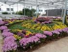 大型花卉市场展览温室工程建设厂家就在山东鲁源公司
