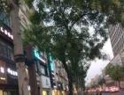 浦东 三林 灵岩南路沿街旺铺转让 证照齐全 急转