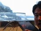 泰安灭蚊蝇蚊蝇带病毒