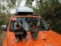 居家宠物寄养!有过年回家的朋友可以把狗狗送来我家哦!