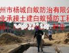 广州市白蚁防治公司 有资质 专业灭白蚁,收费合理
