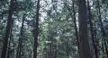 双阳南佟家乡一块山林出售 面积12000平米