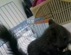 各种可爱的松鼠宝宝