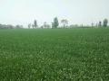 急转整片土地平整肥沃灌溉方便手续齐全、全通水井暗管