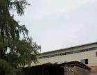 江南周边 吴圩镇友谊路 厂房 700平米