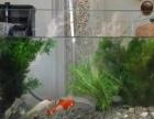 50 30 35 玻璃鱼缸低价转