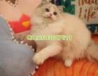在哪里买宠物猫有保障 在连云港哪里可以买到健康纯种的布偶猫