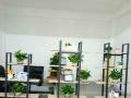 松岗智能高新产业,(非中介)1800精装厂房办公